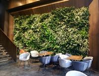 餐厅墙面绿化