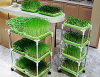 芽苗菜种植架