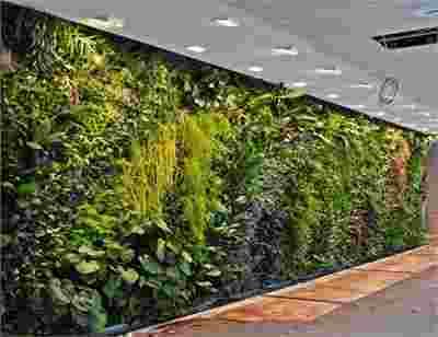 写字楼墙面绿化