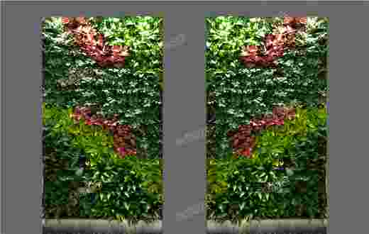 某大学教学楼过道植物墙