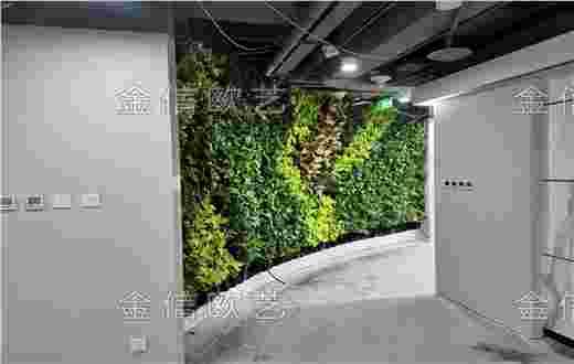北京清华同方B座写字楼办公室植物墙完工