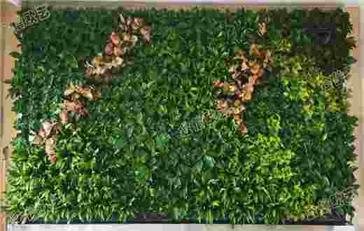 北京某大学鄂尔多斯附属小学植物墙案例