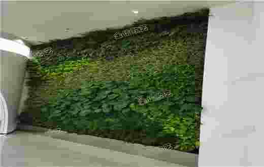 固安商贸城植物墙案例